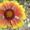 садовые растения   #1374640