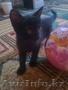 Милые котятки для достойных хозяев!!!