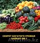 Байкал ЭМ-1  ускоритель роста, продам, Объявление #1619784